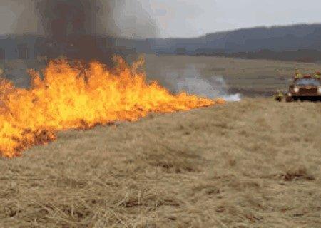 Fire line burning in field
